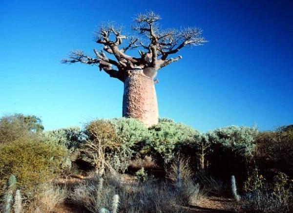 Madagaskar_wyspa_baobabow_5418657